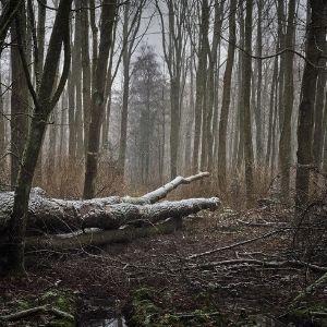 metsakinnistu ostmine. mets vajab hoodustööd